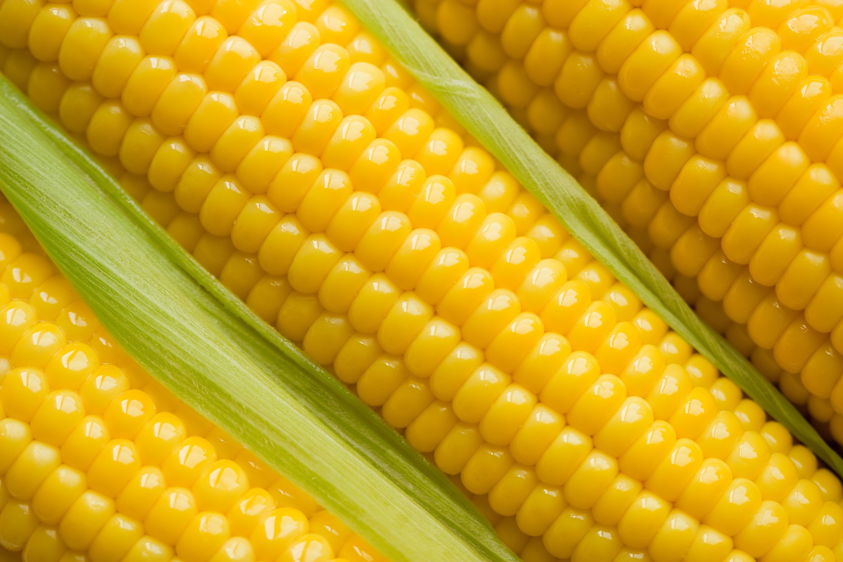 Corn | TARBAX INC